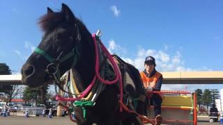 2016年11月3日(木・祝)サンクスホースデイズ in JRA馬事公苑にて、バリアフリー馬車を運行します!