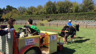 2017年10月9日(月・祝)サンクスホースデイズ in 東京競馬場にて、バリアフリー馬車を運行します!