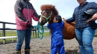 2019年2月11日 馬は理想のセラピスト@京都 を開催します