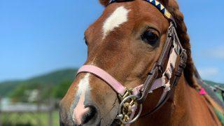2019年10月10日~11日 『乗馬療育』実践研修会 in 浦河を開催します!